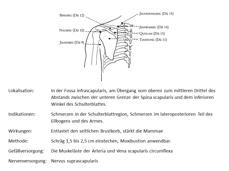 Akupunkturpunkt Dünndarm 11