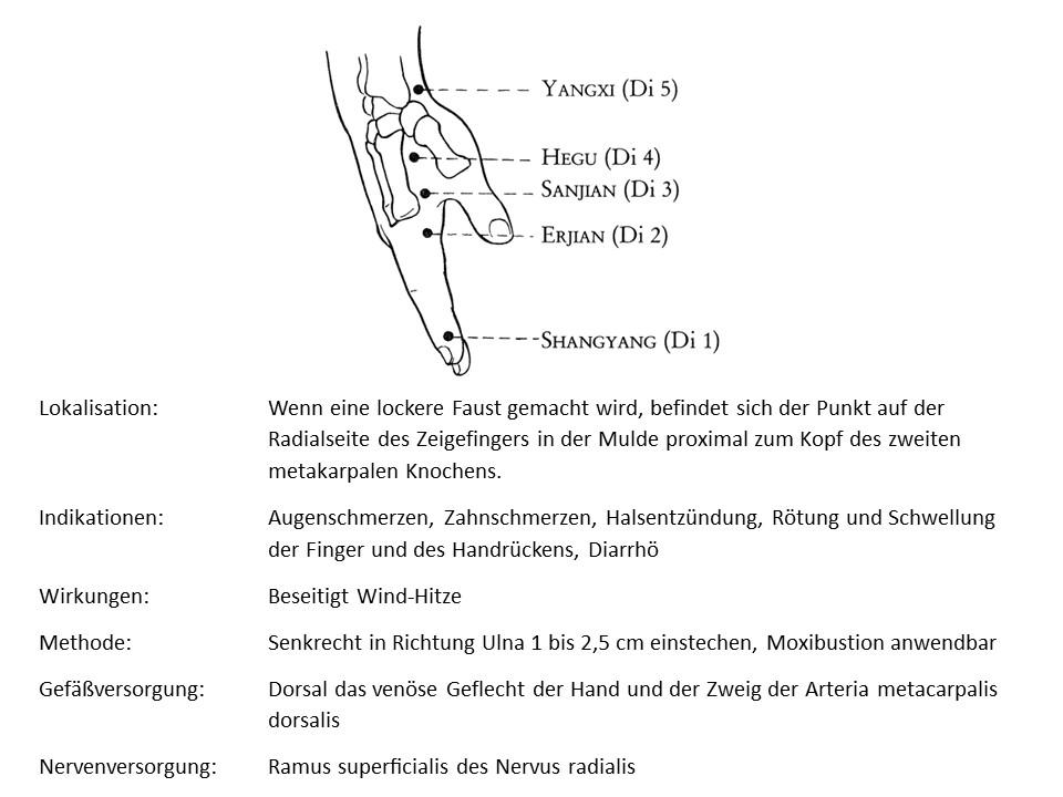 Akupunkturpunkt Dickdarm 3
