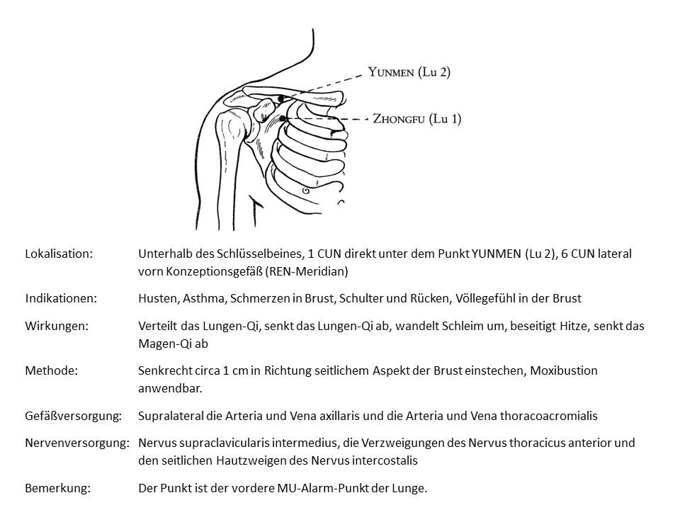 Akupunkturpunkt Lunge 1