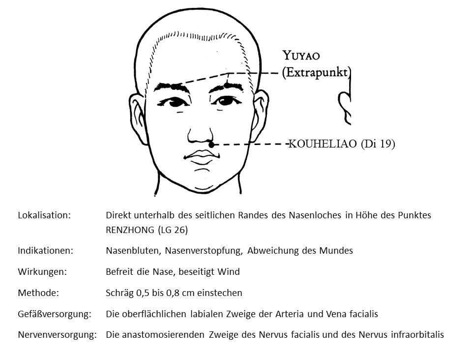 Akupunkturpunkt Dickdarm 19