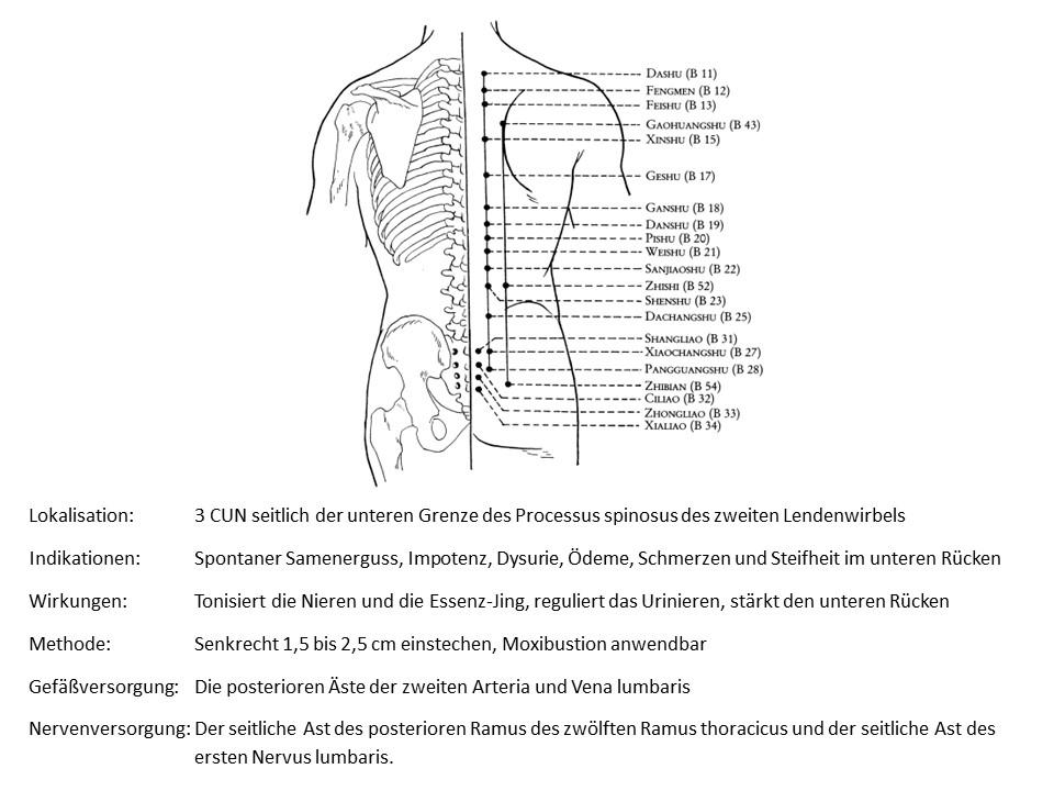 Akupunkturpunkt Blase 52