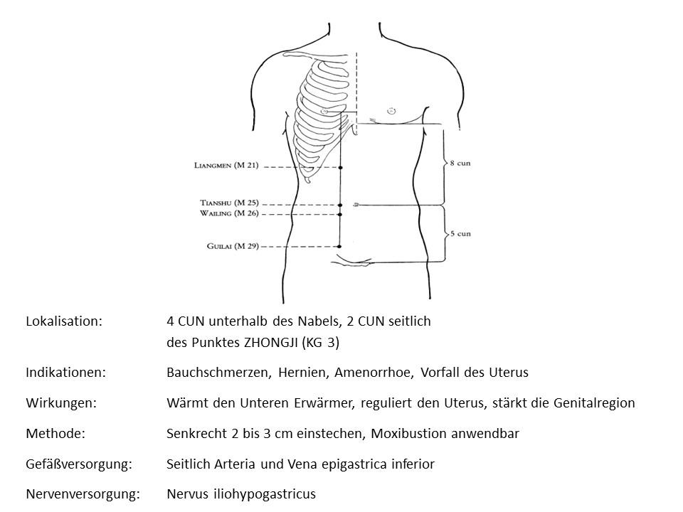 Akupunkturpunkt Magen 13