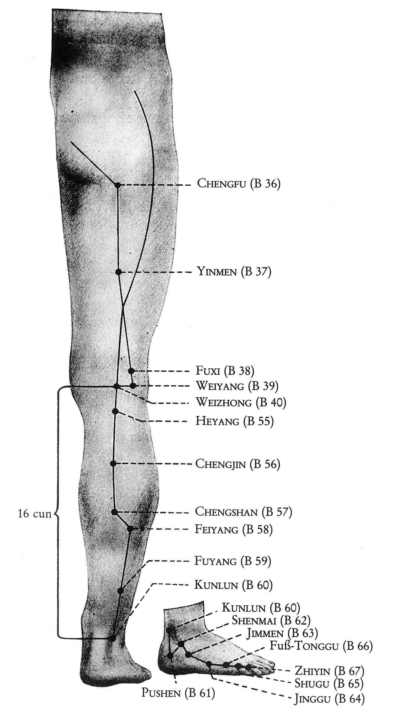 Überblick Blasen-Leitbahn Beine
