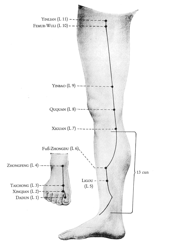 Überblick Leber-Leitbahn Beine