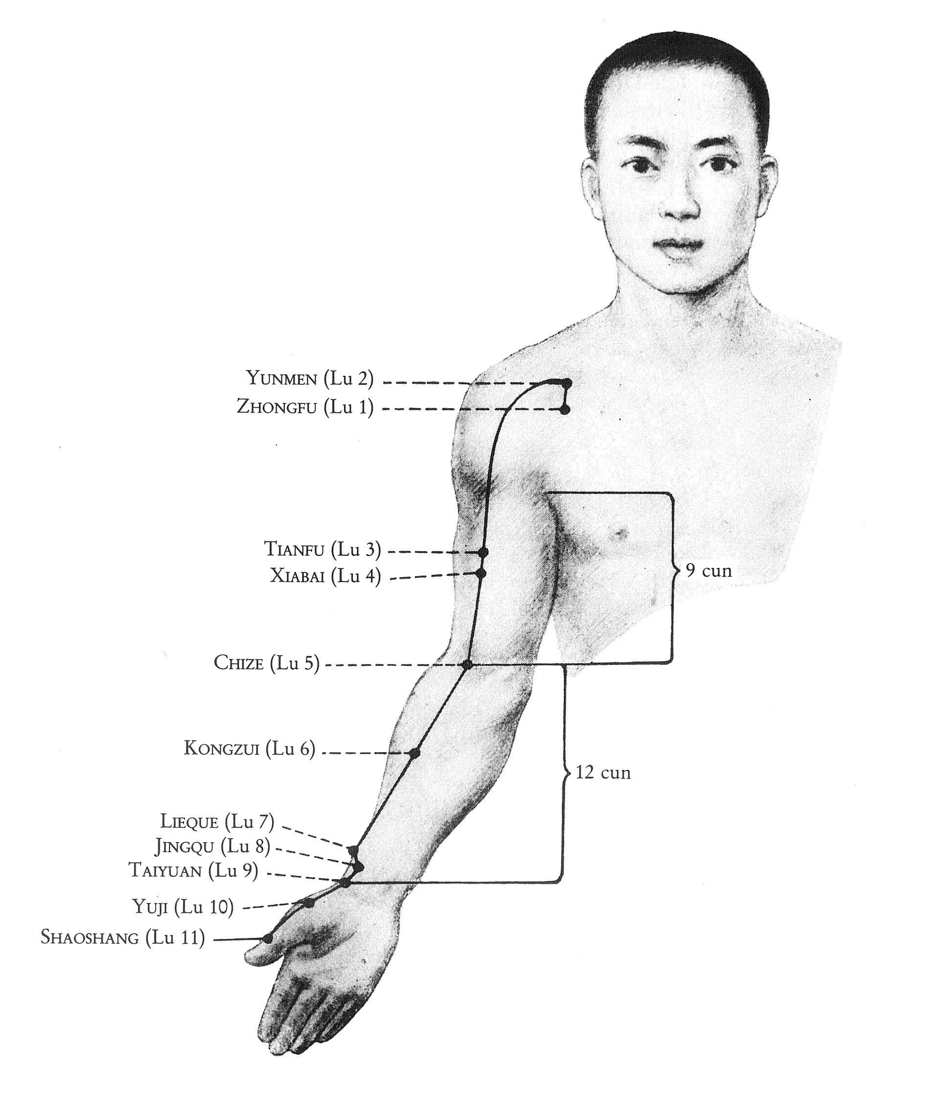 Überblick Lungen-Leitbahn Taiyin Hand