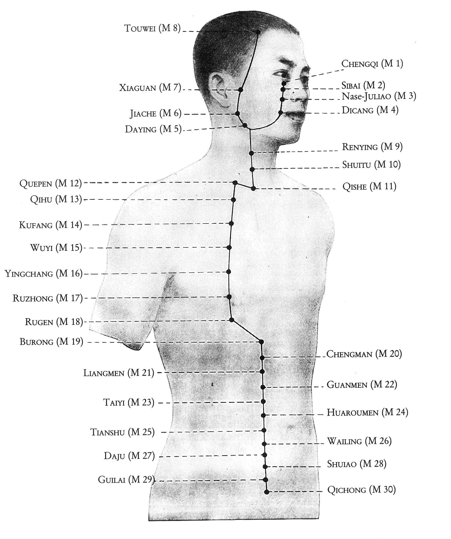 Überblick Magen-Leitbahn Oberkörper