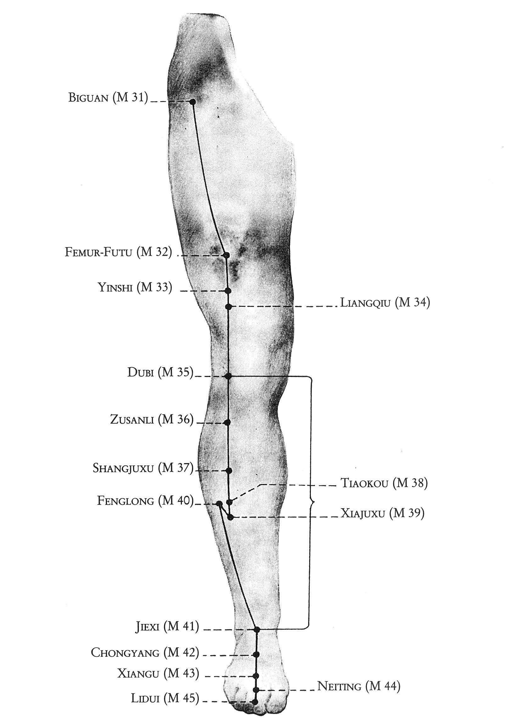 Überblick Magen-Leitbahn Beine