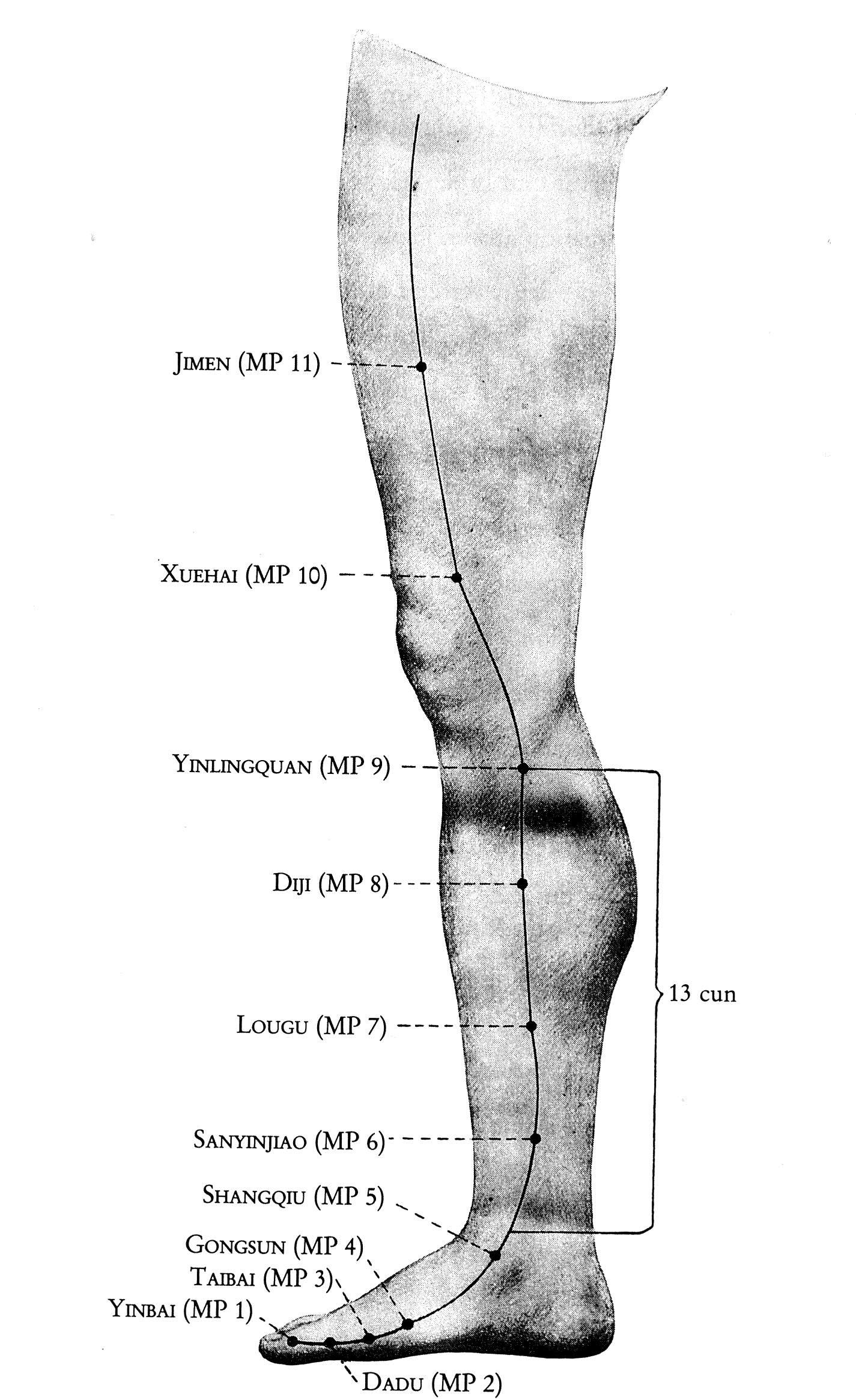 Überblick MILZ-Leitbahn Beine